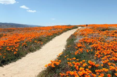 野生カリフォルニアのケシのフィールドを介して小春日和パス。