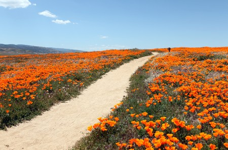 A peacefull path through a field of wild California poppies. 免版税图像 - 6879368