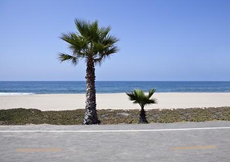 Little beach palms along the Santa Monica bike bath in sunny southern California.   Stock Photo - 7392419