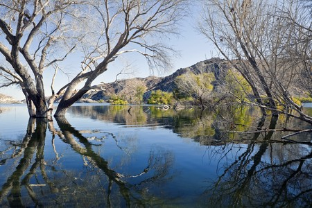 Mojave desert Cottonwood trees in high lake water.  Stock Photo - 7785073