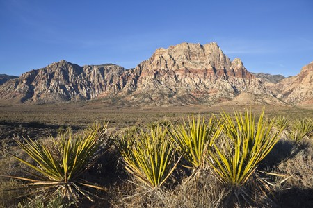 Red Rock Nevada sandstone and Yuccas in warm early morning light. Stock Photo - 7986598