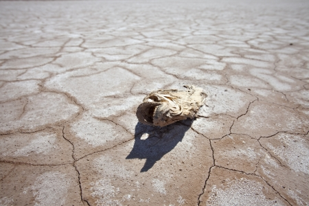 Drought damage dead fish and dry lake in the western United States