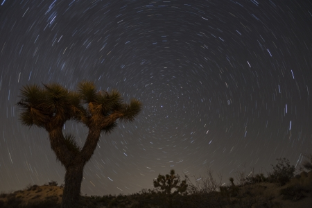 star path: Joshua Tree with star trails in Californias Mojave desert.