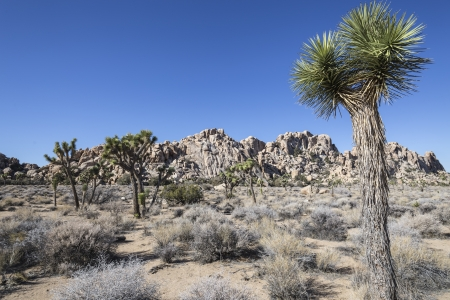 Bright clear morning in Joshua Tree National Park in California Stock Photo - 18003482