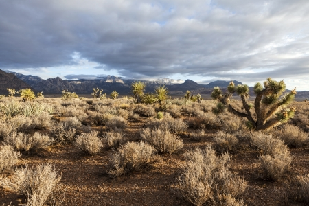 Southern Nevada morning at the popular Red Crock National Conservation Area near Las Vegas.   Stock Photo - 21893683