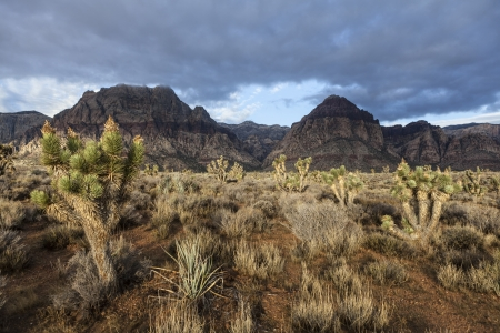 mojave: Stormy morning at Nevadas Red Rock Canyon National Conservation Area.