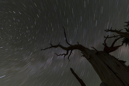 forbidding: Night sky star trails with dead tree in California Stock Photo