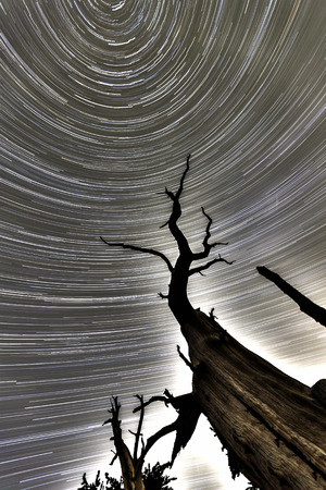 forbidding: North star spiral with dead tree and hdr process.