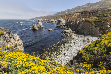 Summer blooms on central Californias Big Sur coast. Stock Photo