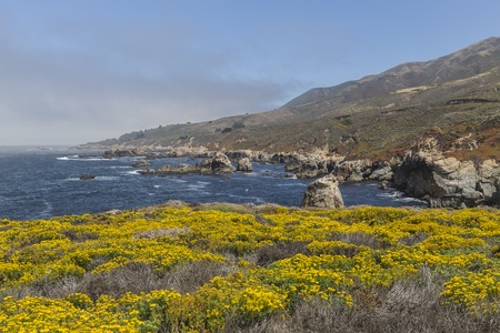 Big Sur summer wild flowers on Californias central coast. Stock Photo