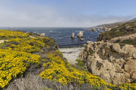Wild flower shoreline on California