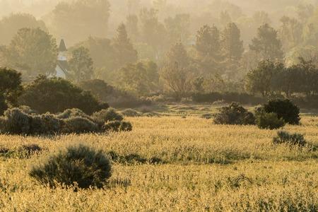 chatsworth: Misty Fiddleneck flower meadow morning in Los Angeless San Fernando Valley.