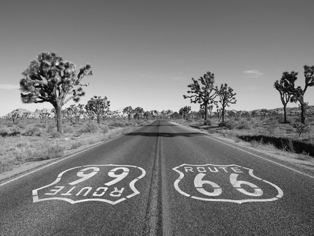 Mojave desert route 66 pavement sign with Joshua Trees in black and white.