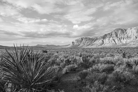 rock canyon: Spring morning in Red Rock Canyon National Conservation area near Las Vegas in black and white.
