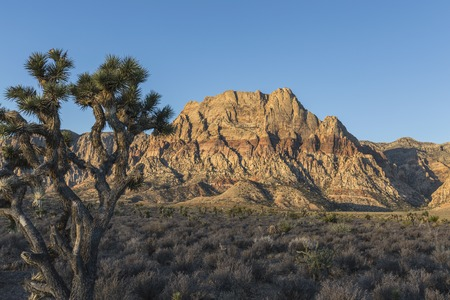 red rock national conservation area: Dawn light on Mt Wilson in Red Rock Canyon National Conservation Area.  The popular park is twenty miles from downtown Las Vegas, Nevada.