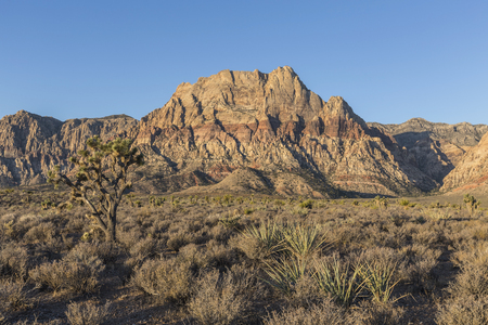 red rock national conservation area: Early morning view of Mt Wilson in Red Rock Canyon National Conservation Area.  A popular natural destination 20 miles from the Las Vegas strip.