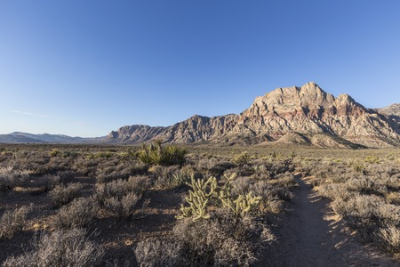 red rock: Early morning in Red Rock Canyon National Conservation Area.  A popular natural destination 20 miles from the Las Vegas strip.