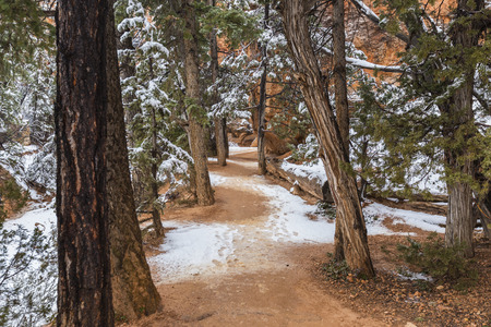 overlook: Snowy forest path at Bryce Canyon National Park in Southern Utah.