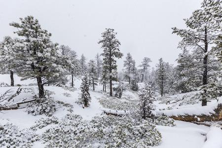 bryce: Heavy winter snowfall in progress at Bryce Canyon National Park.