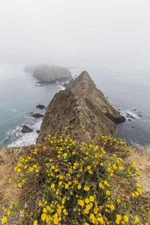 Anacapa Island fog and flowers at Channel Islands National Park in Southern California. Stock Photo