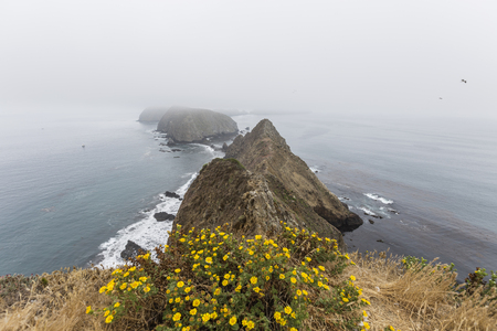 Anacapa Island foggy peaks and flowers at Channel Islands National Park in Southern California. Stock Photo