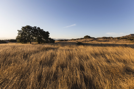 Morning view of tall grass meadow at Santa Susana Pass State Historic Park in the San Fernando Valley area of Los Angeles, California. Stock Photo