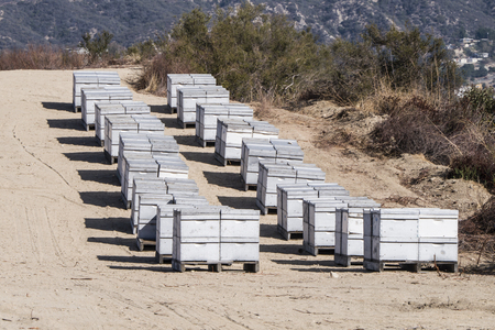 Rows of beehive boxes with active flying bees.