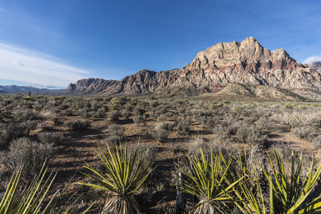 Mojave desert yuccas with Mt Wilson in background at Red Rock Canyon National Conservation Area near Las Vegas Nevada.