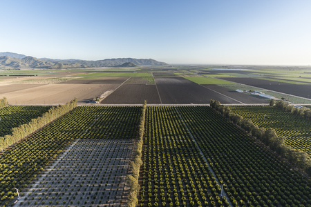 Aerial view of citrus orchards and coastal farm fields near Camarillo in Ventura County, California.