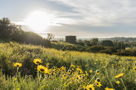 San Fernando Valley spring wildflower meadow and water tank at Santa Susana Pass State Historic Park in Los Angeles, California.