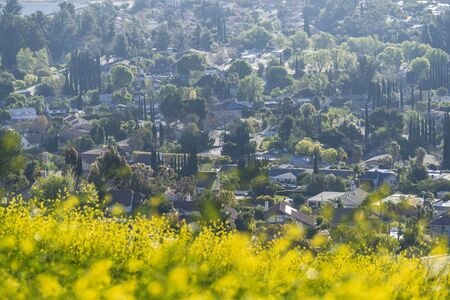 Wildflowers and suburban streets and homes in the San Fernando Valley area of north Los Angeles, California.
