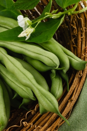 Garden fresh green beans, also known as string beans or runner beans, are a healthy vegetable and part of a nutritious diet Stock Photo - 14674155