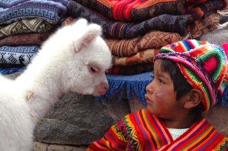 peruvian culture: AREQUIPA, PERU - JANUARY 6: Unidentified Quechua little boy in traditional clothing with baby llama on January 6, 2008 in Arequipa, Peru. The Quechua are a diverse indigenous ethnic group of the Andes. Editorial