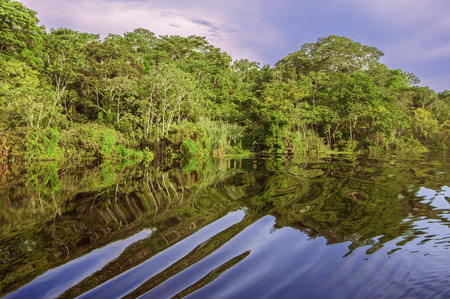amazon rainforest: River in the Amazon Rainforest, Peru, South America Stock Photo