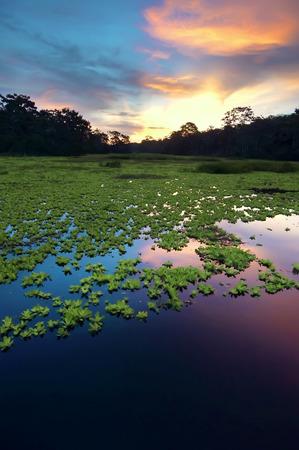 Amazone regenwoud, Peru, Zuid-Amerika Stockfoto