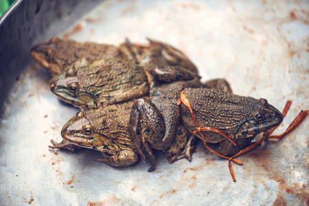 wart: Toads for consumption are being sold on a Vietnamese market