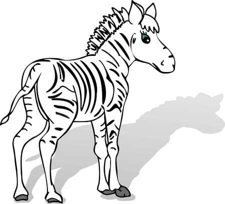 freaked: zebra