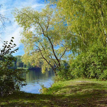Willow op de rivier  Stockfoto - 6280753