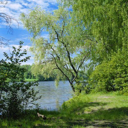 Willow op de River  Stockfoto - 6297816