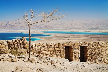 Withered tree, Masada, Israel photo