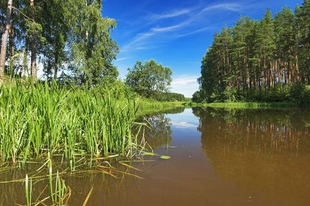backwater: Backwater of the Volga River in the summer, Russia