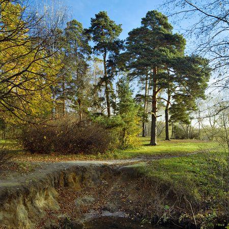 Autumn landscape with pines photo