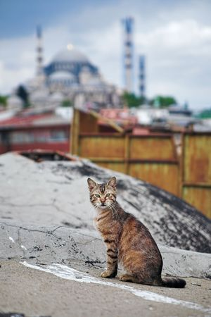 turkey istanbul: Cat in Istanbul, Turkey Stock Photo