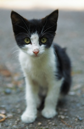 full face: Young kitten at full face Stock Photo