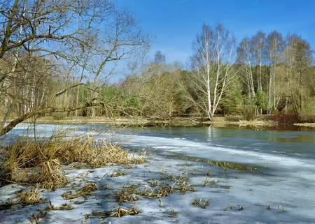 Landscape with trees at the shore of forest lake covered with ice in early spring photo