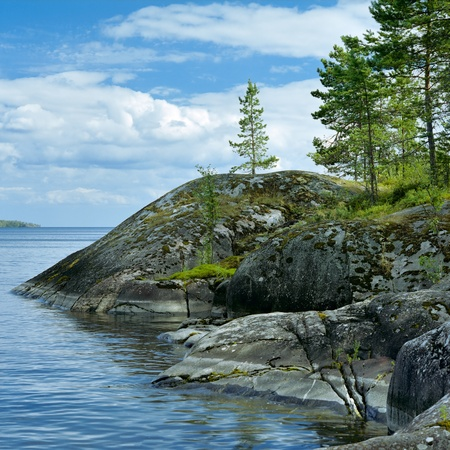 Small pines on the stone shore of Ladoga lake covered with moss and lichen, Karelia, Russia photo