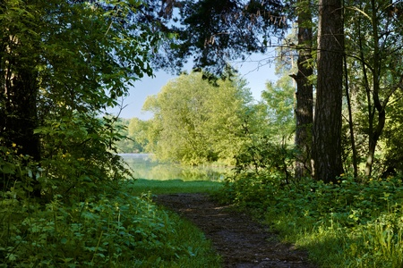 The footpath between the trees leading to the lake on a summer morning, Russia photo