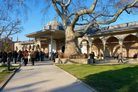 Old platanus in the second courtyard of the Topkapi Palace in Istanbul, Turkey