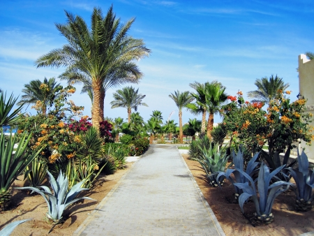 Palms and evergreen plants in hotel in Hurghada, Egypt