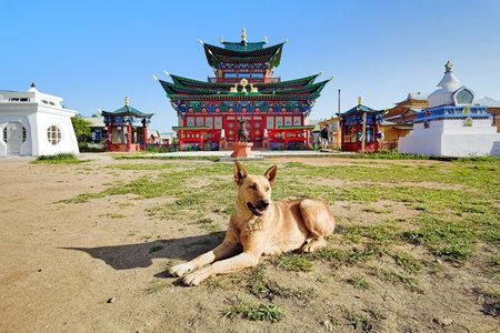 buryatia: A dog near the Temple of Pure Land in Ivolginsky Datsan, Buryatia, Russia Editorial